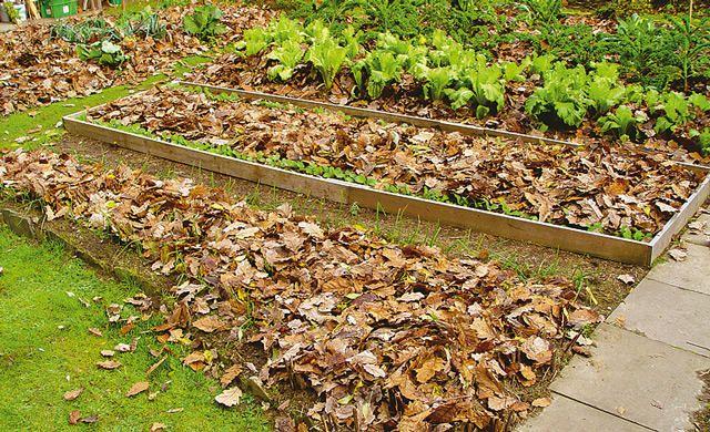 Herbstlaub Flächenkompostierung