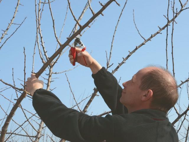 Winterspritzung Obstbäume