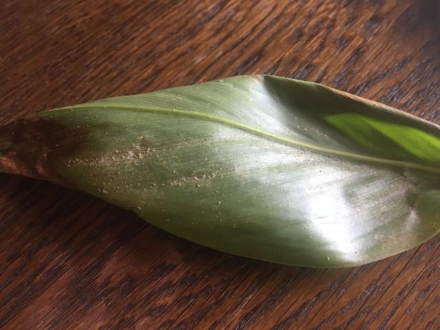 Was kann ich gegen Schädlinge bei den Zimmerpflanzen tun?