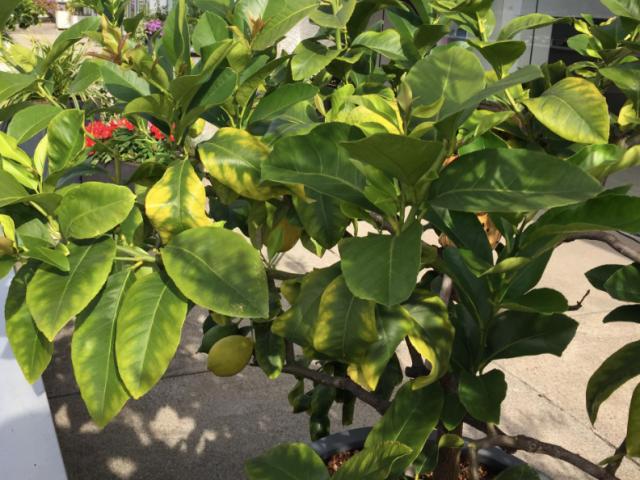 Südländerpflanzen überwintern