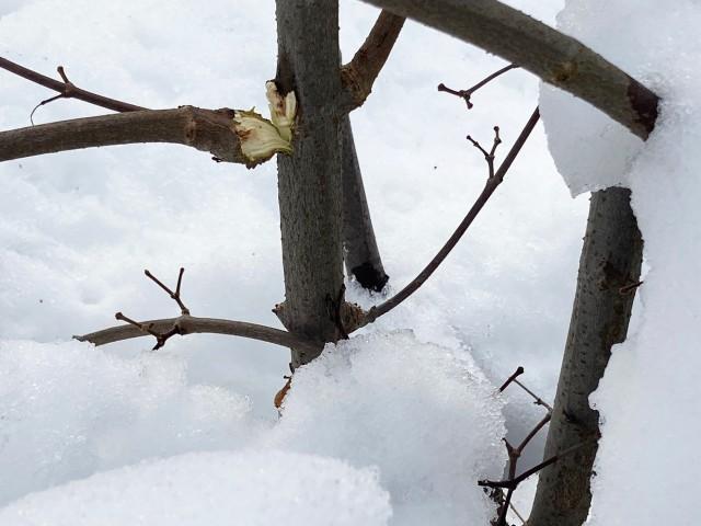 Astbruch durch schwere Schneelast
