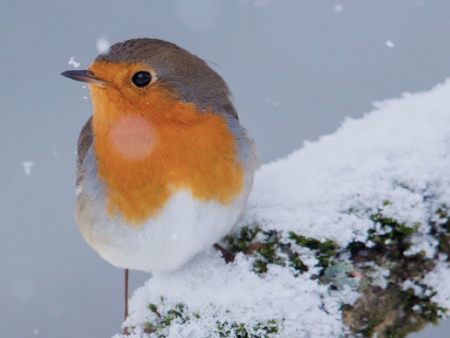 Vögel bleiben vom Futterhäuschen fern